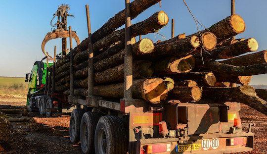 Transport de grumes de bois de chauffage, photo Piskorski