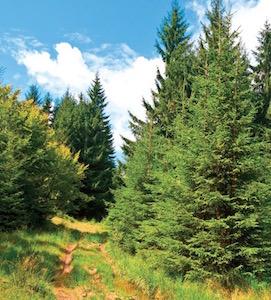 Filière bois occitane