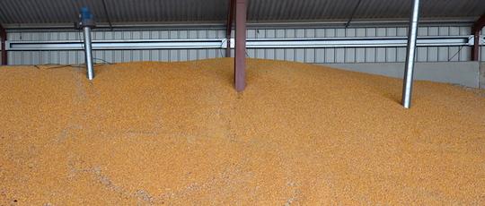Lé séchoir permet de sécher la récolte de maÏs-grain en interne, photo Frédéric Douard