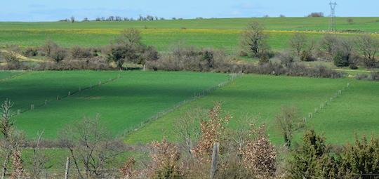 Parcelle avec une toute jeune plantation agroforestière à Flavin en Aveyron, photo Frédéric Douard