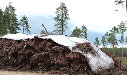 Pile de branches récupérées pour l'énergie en Lettonie, photo Frédéric Douard