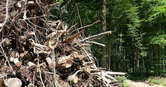 La commercialisation des sous-produits forestiers permet de financer la sylviculture menant à la production de bois d'oeuvre de qualité, photo Frédéric Douard