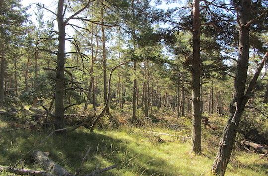 Les forêts ont besoin de recettes financières et donc de débouché pour être entrenues, photo Marie de Guisa, AgroParisTech