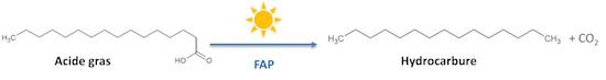 Schéma de la réaction catalysée par la FAP