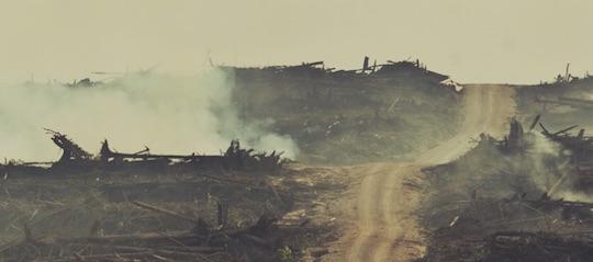 Les peuples forestiers viennent interpeller le gouvernement français sur l'huile de palme