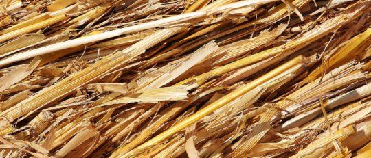 AgriCarbone – mobilisation durable de biomasse agricole non alimentaire