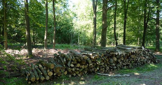 La biomasse durable, première énergie renouvelable de la planète, attaquée par des lobbies !