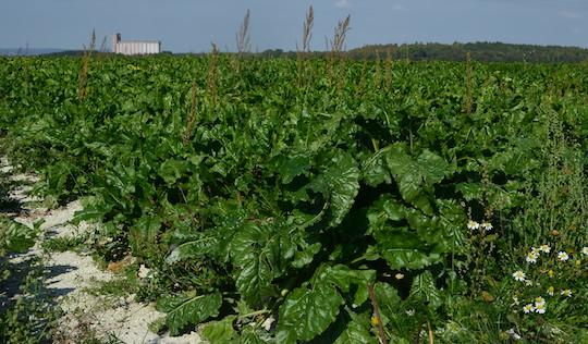 La filière européenne du bioéthanol menacée par le dumping américain