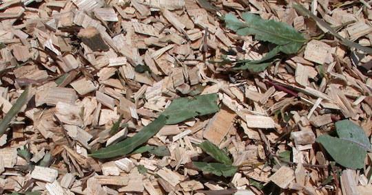 Le royaume d'Eswatini recherche des développeurs de centrales à biomasse