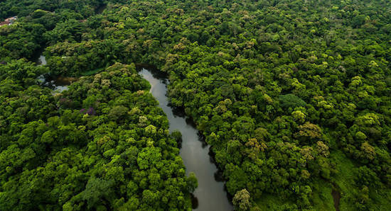 L'Assemblée Nationale réintègre l'huile de palme dans la liste des biocarburants