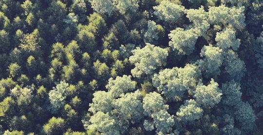 Témoignages : le bois, énergie durable en Europe et opérée par Dalkia
