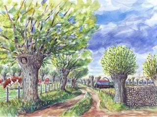2020 est l'année des trognes ou arbres taillés en têtard