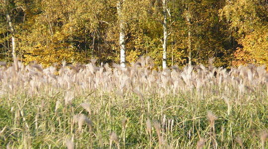 Nos forêts et nos champs pourraient faire beaucoup plus pour le climat