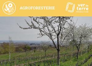 12 et 13 mars 2020, l'arbre outil de production et de protection en Corse