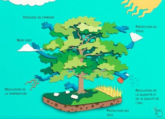 Remettre des arbres dans les champs pour une agriculture durable et encore plus de bois-énergie