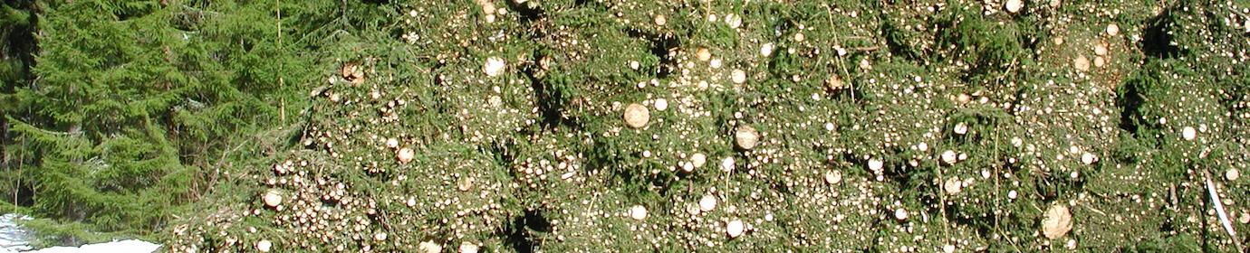 Fagots de rémanents forestiers, photo Frédéric Douard