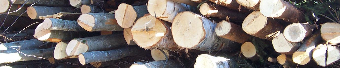 Perches de bois-énergie avant déchiquetage
