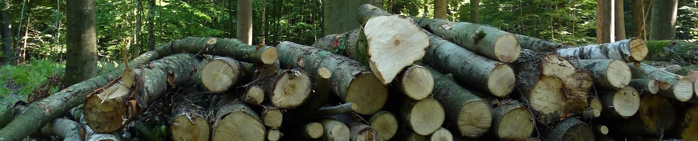 Entreposage de bois-énergie en forêt, photo Frédéric Douard