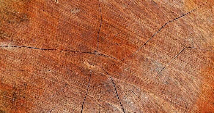 Le bois, pièce maitresse de la la future réglementation environnementale 2020
