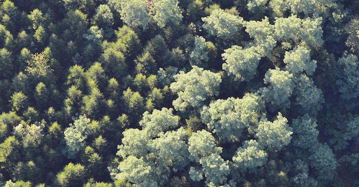 Une série de cinq vidéos pour mieux comprendre la filière forêt bois française