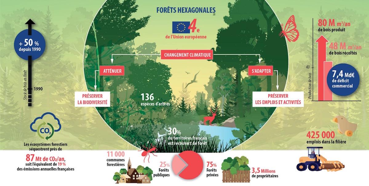 Quelle sylviculture durable pour adapter et valoriser la forêt française ?