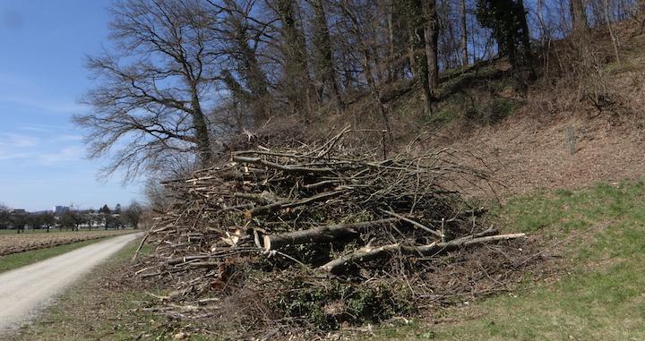 Le bois-énergie, lueur d'espoir de la gestion forestière durable en Suisse