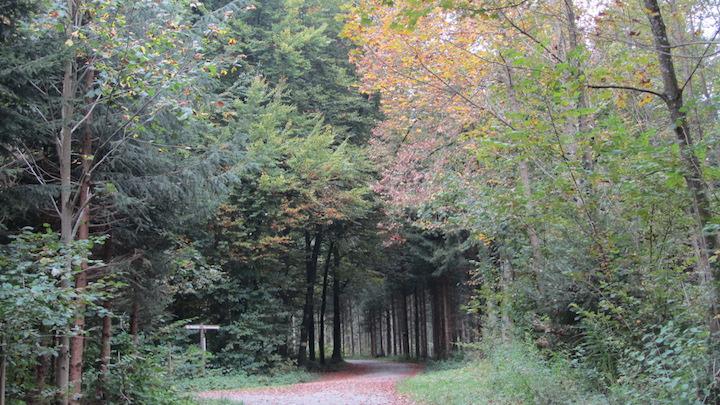 Témoignages dans toute la Suisse sur le rôle du bois-énergie dans la gestion durable de la forêt