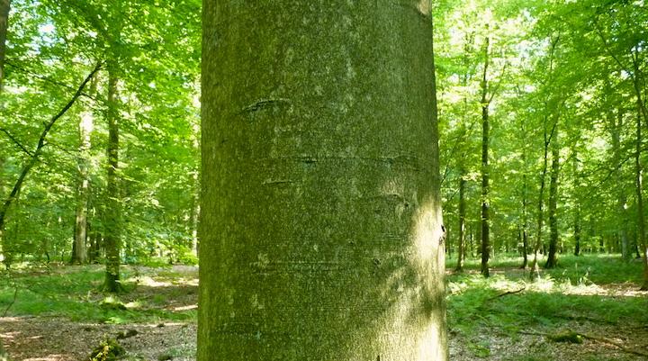 Le carbone ne doit pas devenir le critère d'évaluation exclusif des pratiques forestières